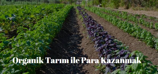 organik tarım yaparak para kazanmak